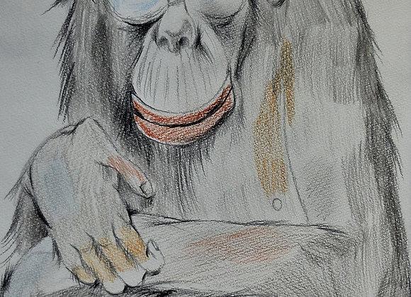 『チンパンジー』今岡凜太郎:作