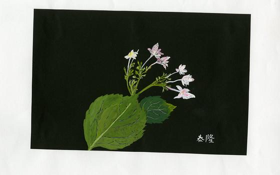 スミダノハナビ 泰隆585.jpg