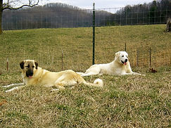 Freya and Heidi