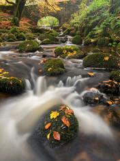 Autumn Leaves on the Rocks
