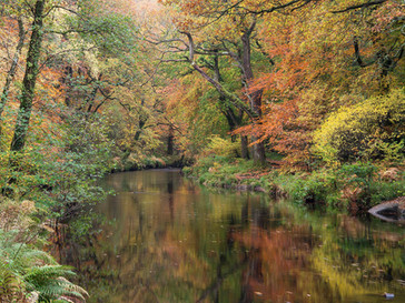 Fingle Colours