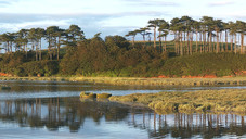 Otterhead Reflections