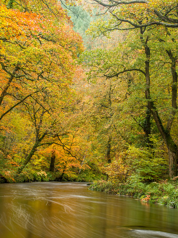 Teign Autumn Gold