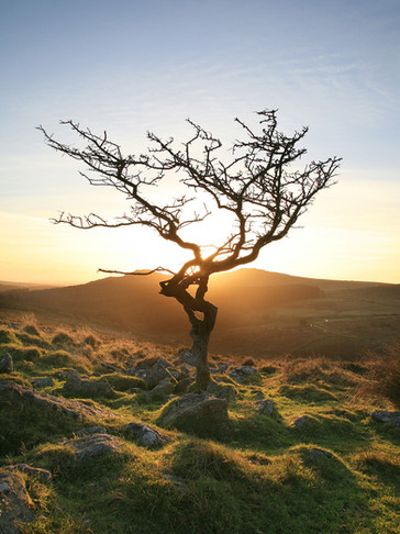 Alone on the Moor