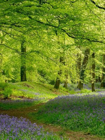 Devon Spring Shades