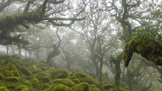 Wistmans Mist