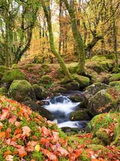 Burrator Autumn Leaves
