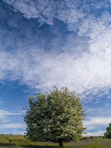 Emsworthy Skies
