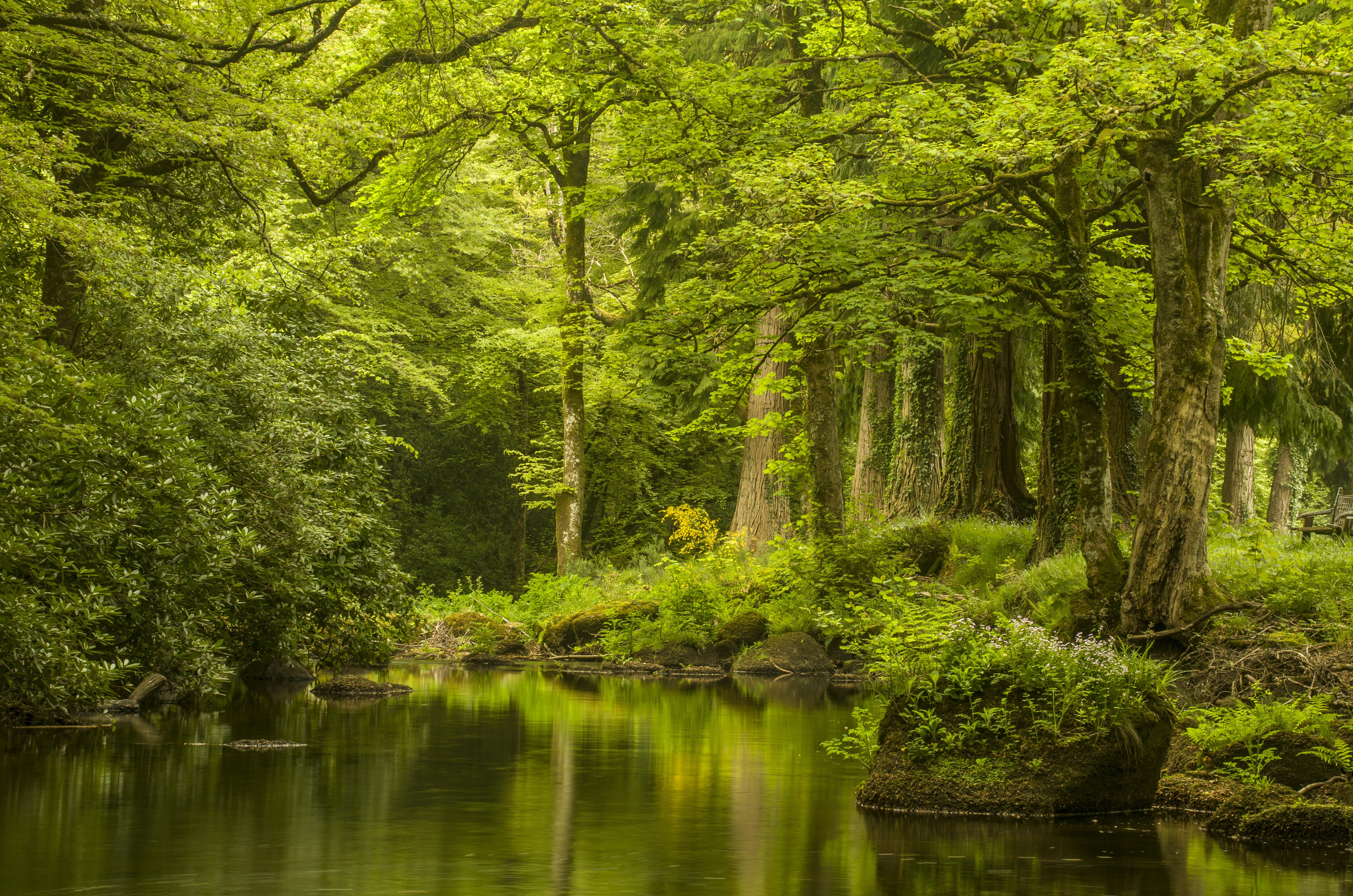 Gidleigh Stream