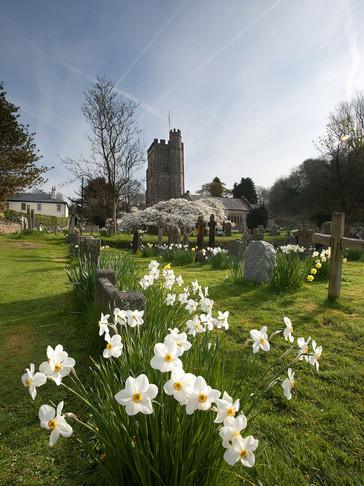Salcombe Regis Church in Spring