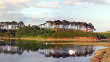 Ottermouth swans