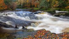 Dartmoor Autumn Rush