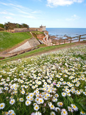 Daisies at Jacobs ladder