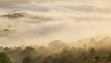 Dartmoor Valley Mist