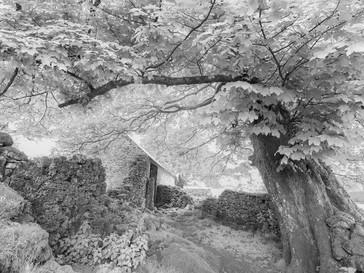 Oak and Barn