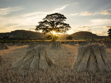 Stooks at Sunset