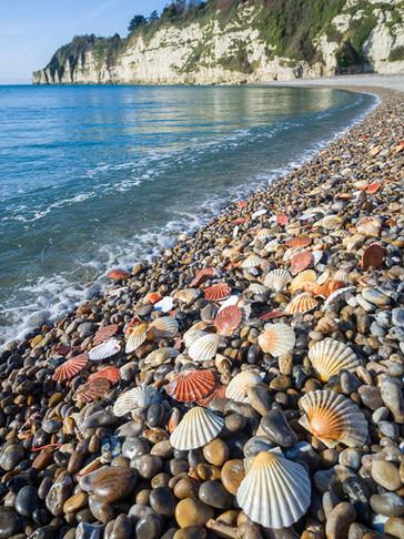 Shells on Beer Beach