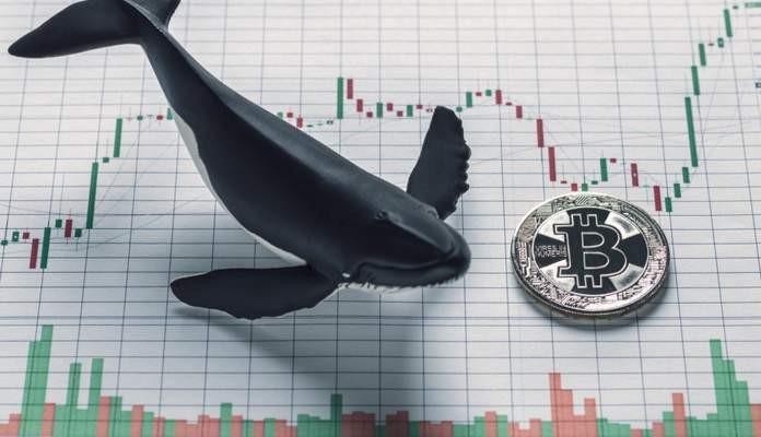 Grandes investidores seguem aumentando suas posições em bitcoin, diz relatório