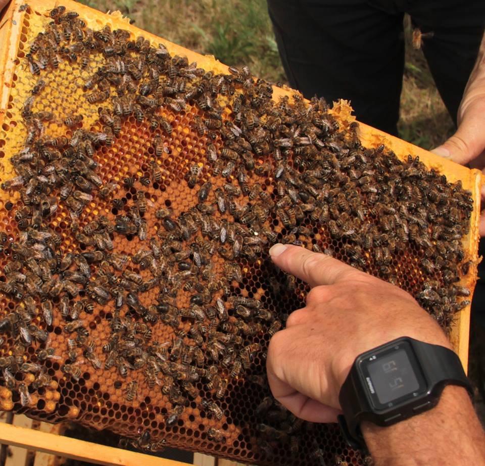 Initiation à l'apiculture
