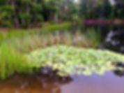 jacks horner pond.jpg
