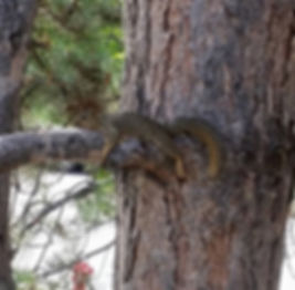 website squirrel.jpg