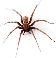 spider_isolated_202802.jpg