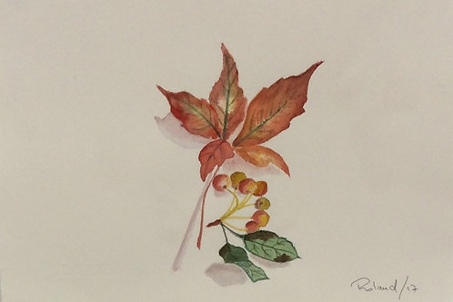 5 Week Course - Use the beautiful transparent medium of watercolour.