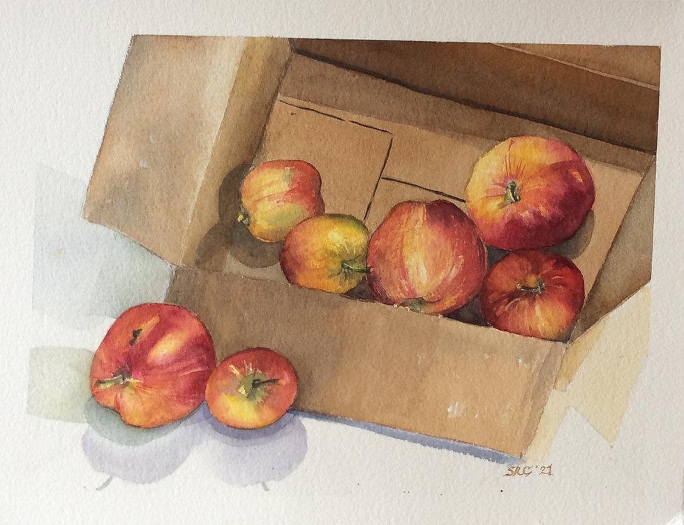 Apples in a box.jpg