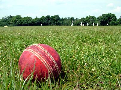 cricket-1164891.jpg