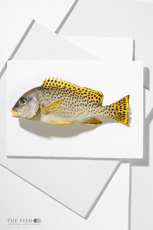 TS001 - The Fish - 007.jpg
