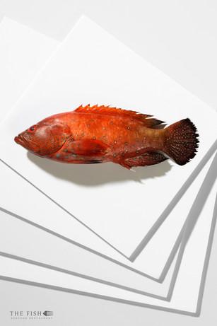 TS001 - The Fish - 010.jpg