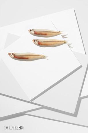 TS001 - The Fish - 014.jpg