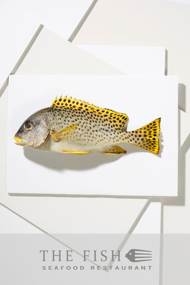 Fish restaurant poster 2 – Abu Dhabi local fish shot on white mounting boards