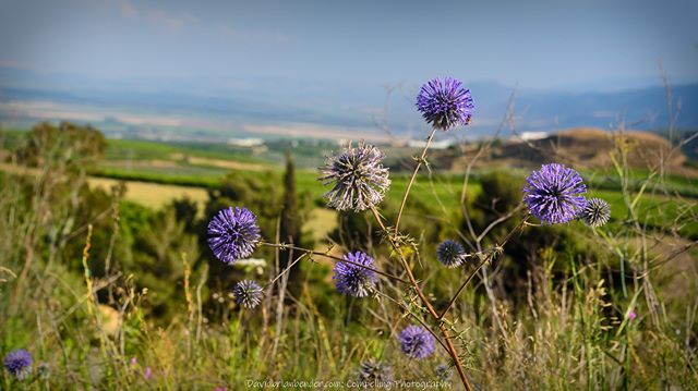 'Rockin' the View' - #thistles and a #go