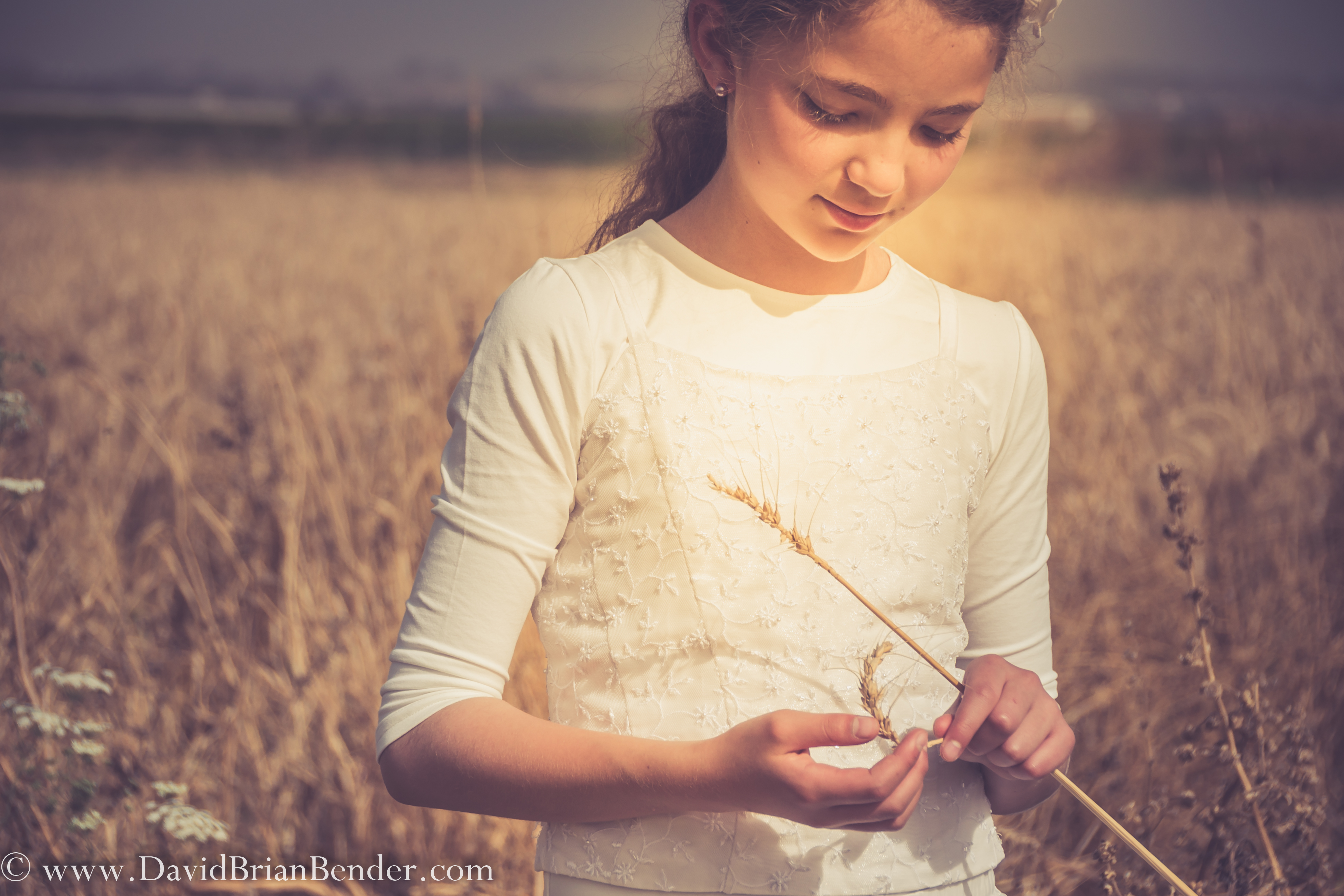 Livnot Kahal wheatfield eqed-6