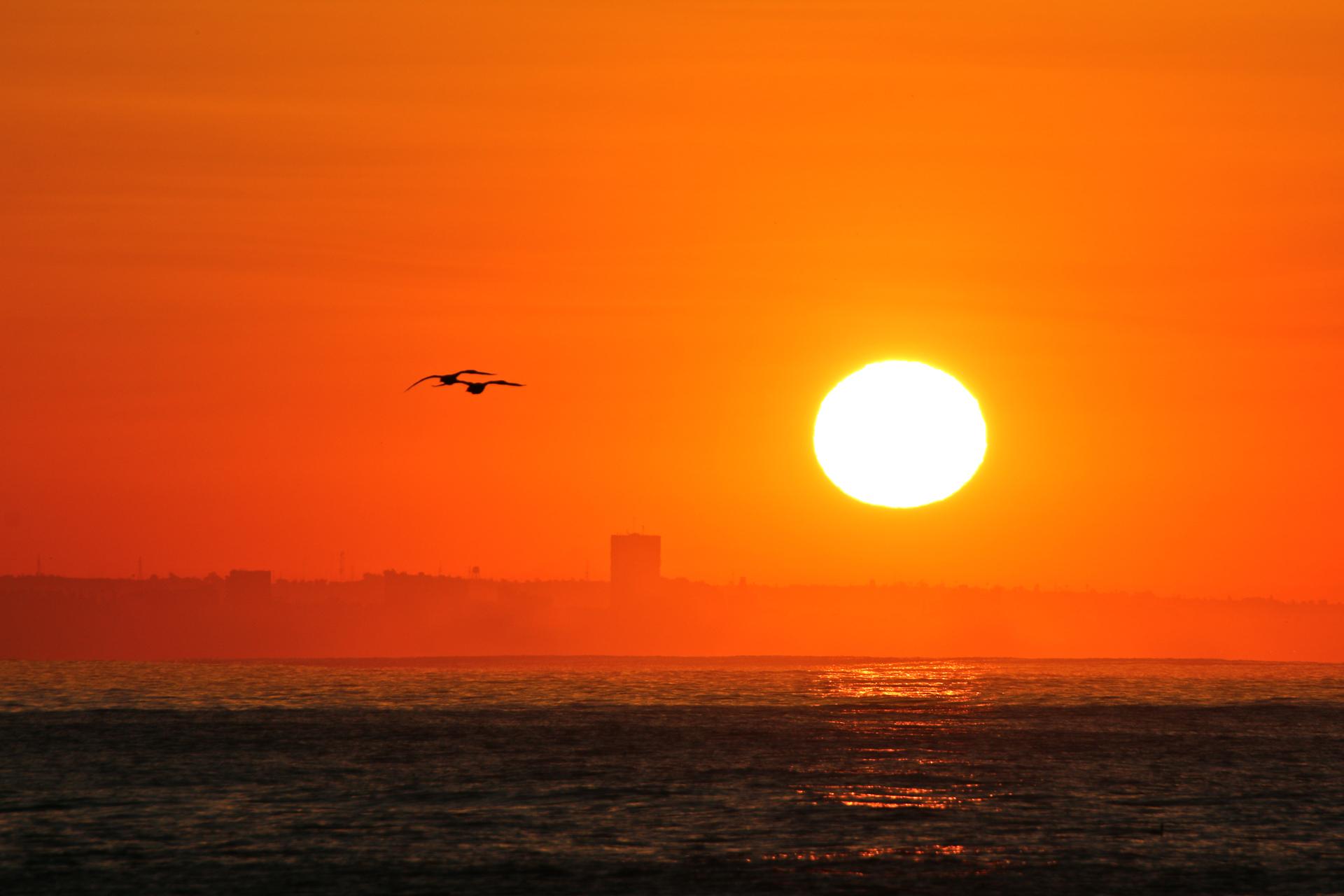sunrisebirds