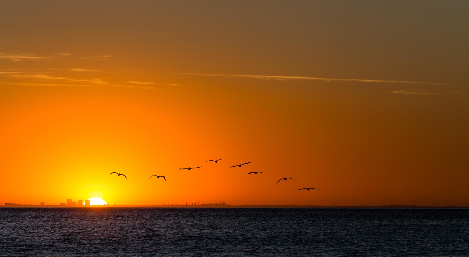 swb_sunset_birds