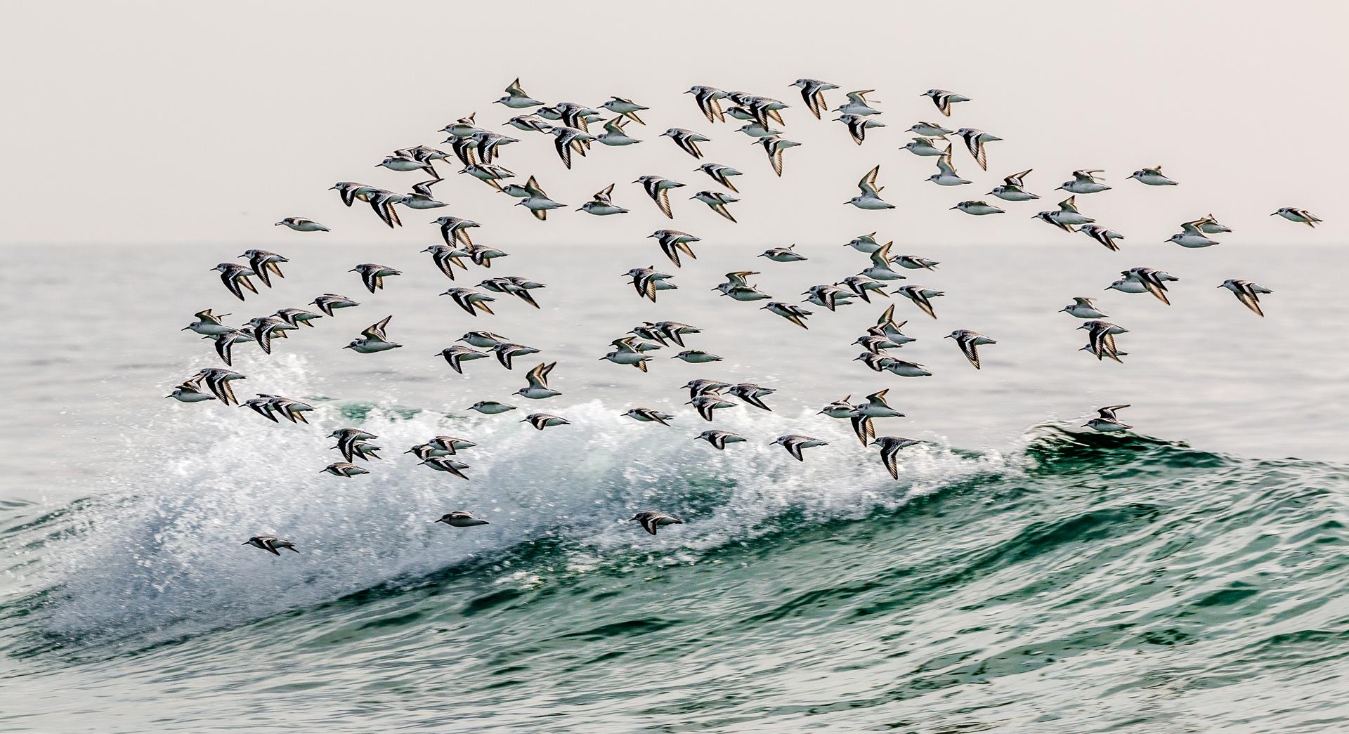 swb_birdfishwave
