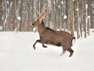 Hunting in Polk County