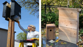 Bird & Bat boxes, Ice Watchers, Winter Heating and Fire Safety.