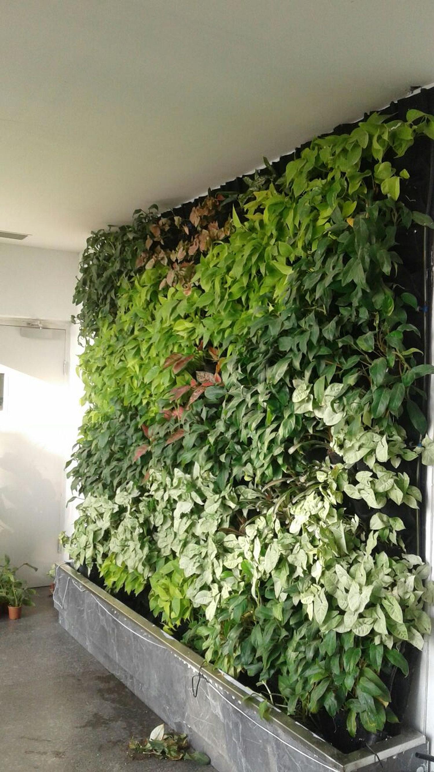 Vertical Garden  Green Wall Gurugram