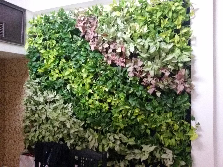 Vertical Garden Green Wall Bhopal