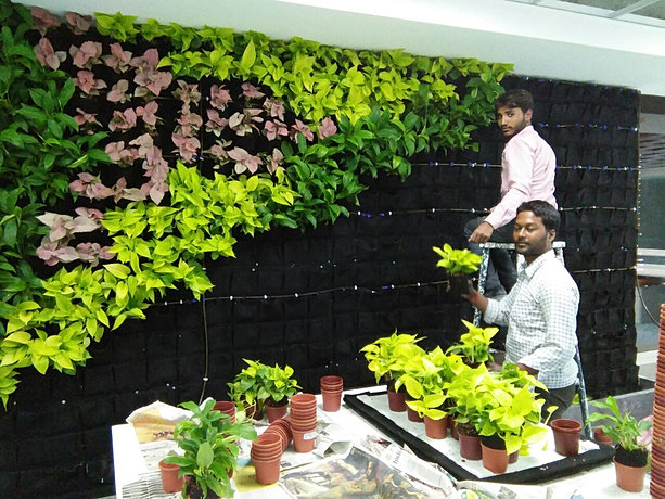Green walls indoor and outdoor vertical gardens lifewall for Arcadis bangalore