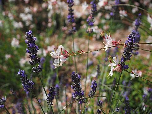 flowers-1521662_1920.jpg