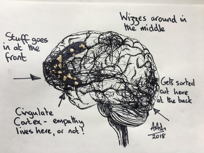 Cingulate Cortex Andy Ash 2018