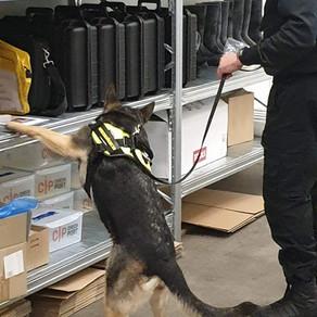 Hundträning hos Checkport