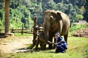 Elephants in the sun