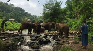 Strengthening Elephants and Awareness in Thailand
