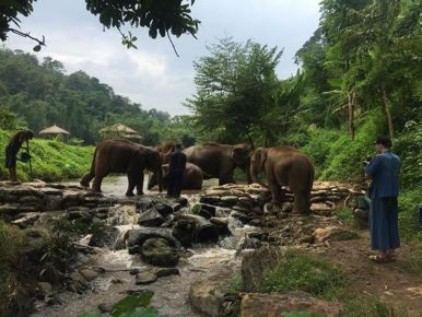 Humanitarian Work- Elephants Crossing the River