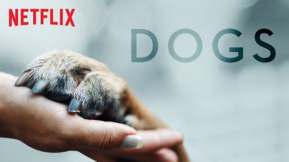 dogs-trailer.jpg
